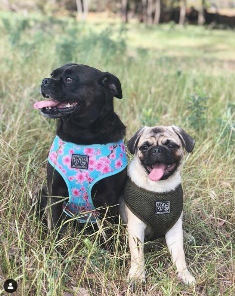 lakelands estate luluandfrankies_puglife