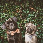 lakelands estate luluandfrankie_puglife