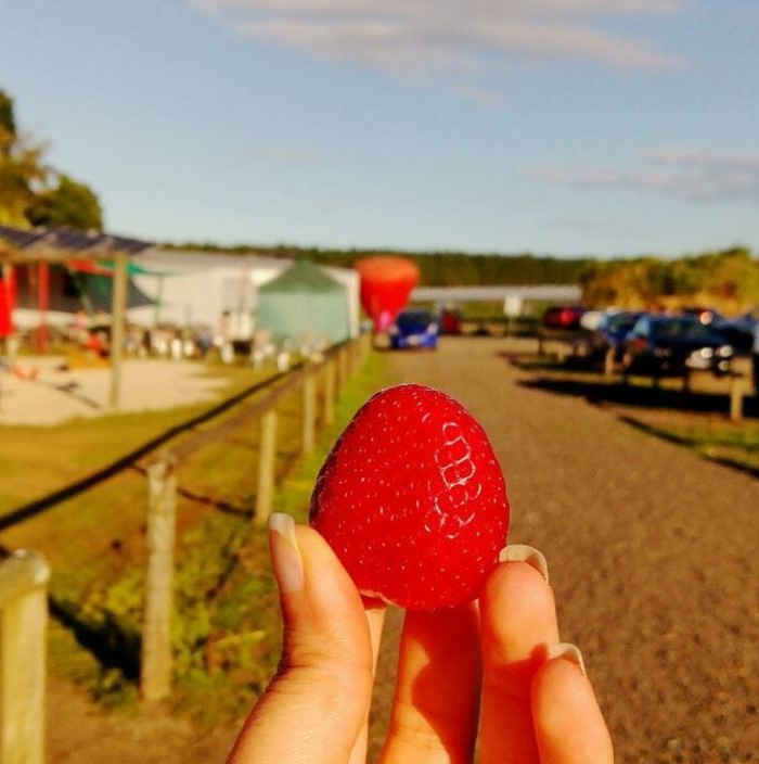 Enjoying strawberrys at strawberry farm near Riverbank